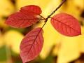 foliage_0122contest-f5795ca9eec309cc3b37e7d96c104afccced8e53