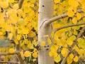 foliage_0345contest-6b324fee25a6bb1e23fa102e134a19aad1ce9624