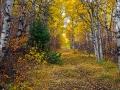 abandoned-trail-500-98ea905009e06e1e3e65317aeca7f976a50e5f5c