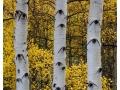 eyes-of-the-forest-b2e3cac86b67a11e2ea345c2563e235c0e9ba8d4