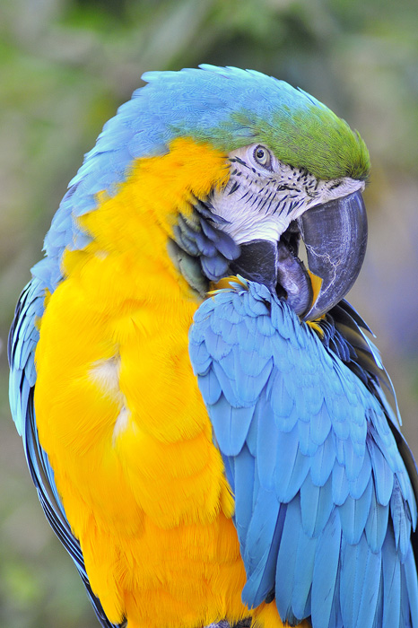 """Bianchi,"" a macaw at Catamaran Resort and Spa."